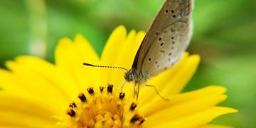 【X20】蝴蝶与花