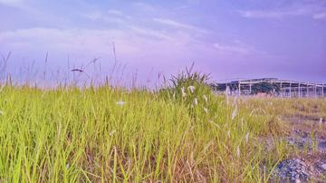 【X9摄影】夏天,和太阳比个早