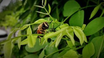 这只蜜蜂在打招呼