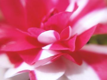 【X21样张】微距水梅