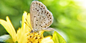 【X20】蝴蝶和洋姜花