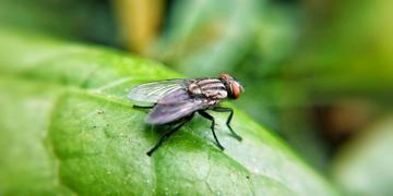 【X20】厌恶的苍蝇
