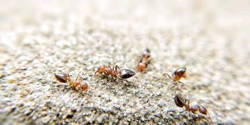【X20】蚂蚁的战争