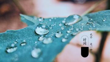 【vivo x9s】雨后治愈色