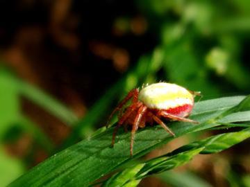 【V3Max A】微视界/蜘蛛