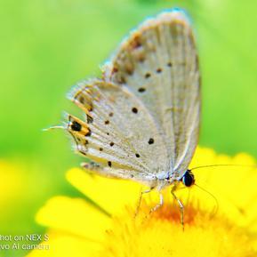 蝴蝶自在飞