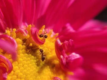 【NEX拍摄样张】蚂蚁精灵