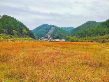 【秋】鱼姐河的秋天