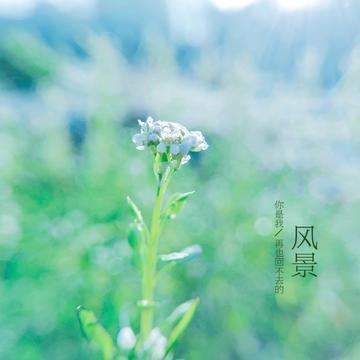 【X23拍摄样张】青色