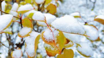 【NEX】一场雪