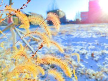 【X23拍摄样张】雪后清晨
