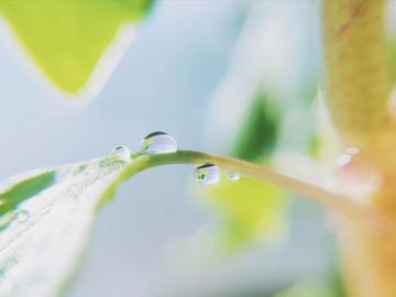 【X23】水滴