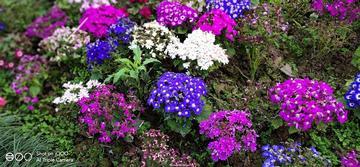 【寻春】打卡重庆花卉园