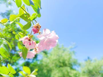 【NEX】蔷薇季