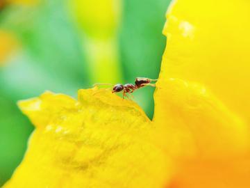【X23】微距·昆虫