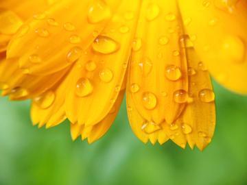 【NEX】雨后