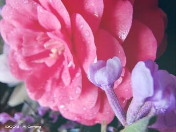 【摄影专题】哈喽,春暖花开