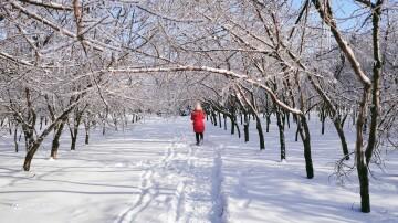 #Y52s冬日美景#冰雪奇缘